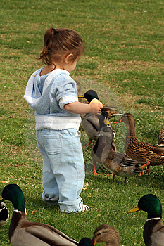 darling little toddler learns baby sign language for duck while seeing ducks at a park